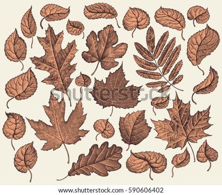 tree leaf design set hand