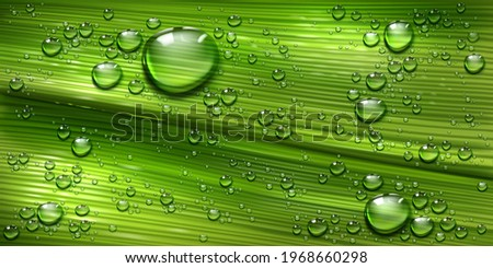 tree leaf texture with water