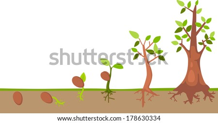 Plant Growth Cycle Free Vector Download Free Vector Art Stock
