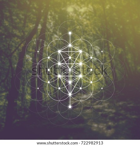 tree of life sacred geometry