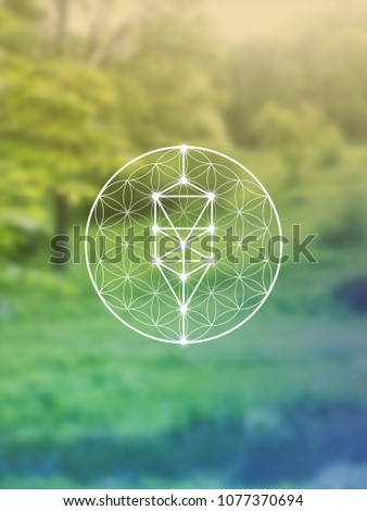 Tree of life - the interlocking circles ancient symbol. Sacred geometry. Mathematics, nature, and spirituality in the world. Self-knowledge in meditation.