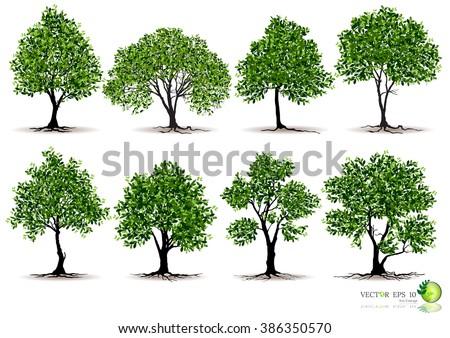 tree on white background tree