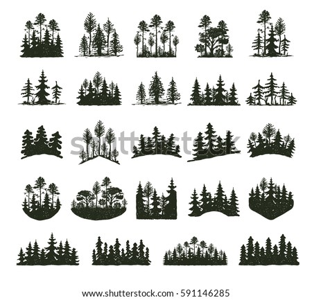 tree outdoor forest black