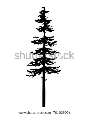 tree pine silhouette, black vector cypress forest nature, white and black drawing illustration, icon tree template