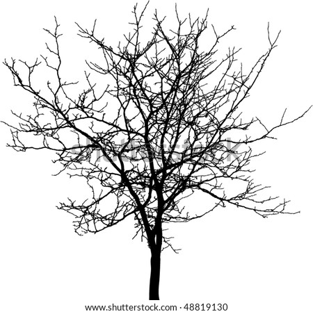 Tree silhouette - detailed vector - stock vector