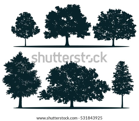 Tree silhouettes - red maple ,sugar maple, oak, poplar, green oak, birch