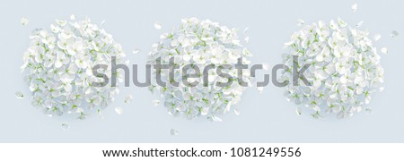 Tree vector white Hydrangea flowers and Apple blossom with flying petals in watercolor style  for 8 March, wedding, Valentine's Day,  Mother's Day, sales and other seasonal events.