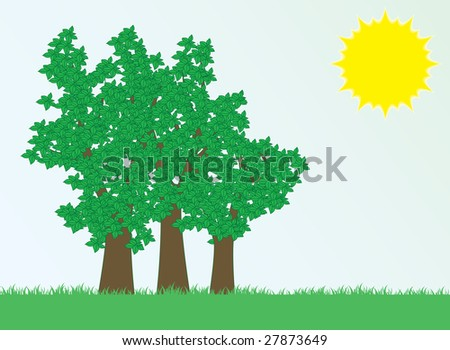 Trees and sun. Landscape.