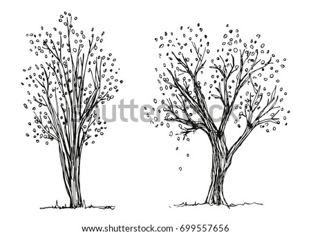 trees autumn hand drawing