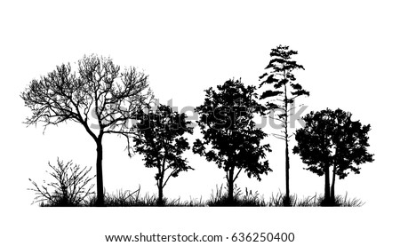 trees in the forest landscape