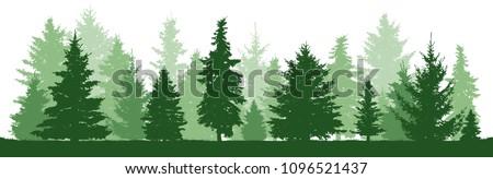 trees pine  fir  spruce
