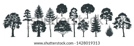 trees silhouettes forest and