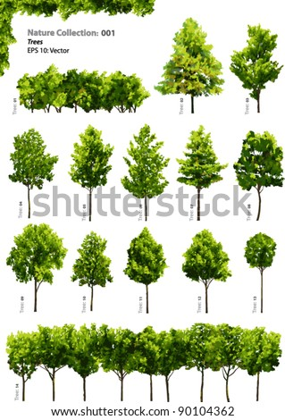 trees   vector nature