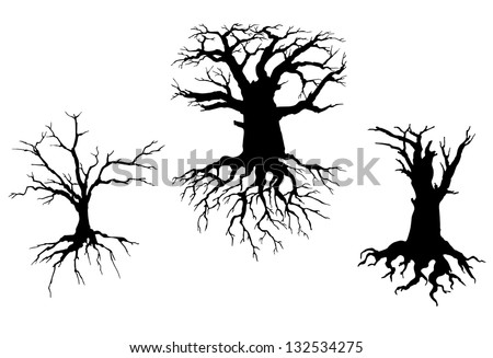 Dead Trees Trees With Dead Branches And