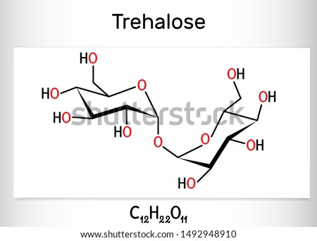 Trehalose, tremalose carbohydrate molecule. Also known as mycose. Is a disaccharide consisting of two molecules of glucose.  Structural chemical formula. Vector illustration