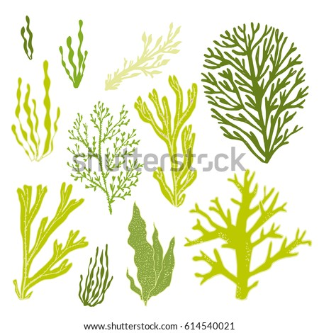 Trendy summer seaweed design. Seamless vector pattern.