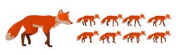 Tricky red fox, set of frames or sequences for character animation.
