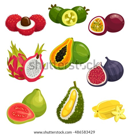 Tropical and exotic fruits isolated icons. Vector elements of lychee, dragon fruit pitaya, papaya, durian, passion fruit maracuja, carambola, fig, guava, feijoa