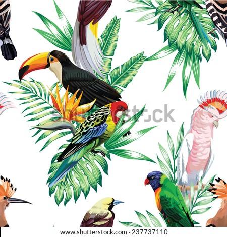 tropical animals birds parrot