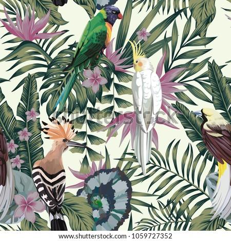 tropical birds parrot hoopoe