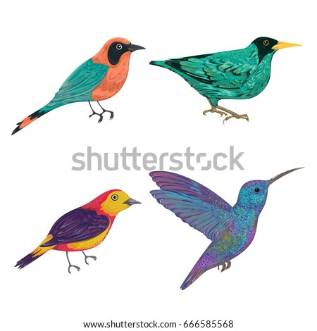 Tropical birds set. Exotic fauna. Isolated elements. Vintage hand drawn vector illustration in watercolor style