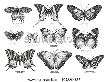 Tropical butterfly collection, illustration, drawing, engraving, ink, line art, vector