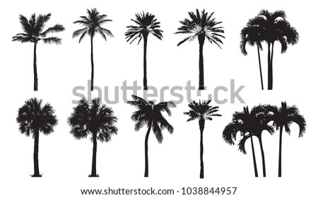 Tropical coconut palm, different natural varieties of trees.  Set of vector illustrations. Perfect realistic black silhouettes isolated on white background.