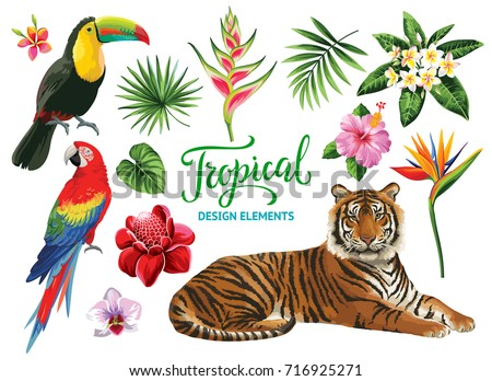 tropical collection  exotic