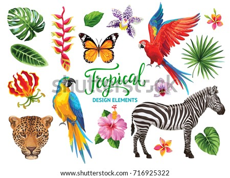 Tropical collection: exotic flowers, leaves, butterflies, birds and animals. Vector design isolated elements on the white background.
