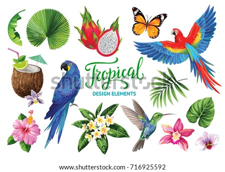 tropical collection for jungle