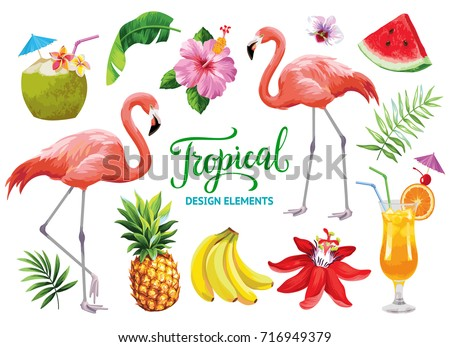 Tropical collection for summer beach party: exotic flowers, leaves, cocktails, flamingos and fruits. Vector design isolated elements on the white background.