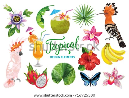 Tropical collection for summer party: cocktails, exotic flowers, leaves, fruits, birds and butterflies. Vector isolated elements on the white background.
