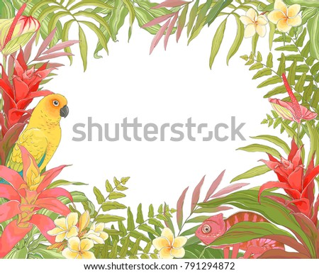 tropical decoration frame for