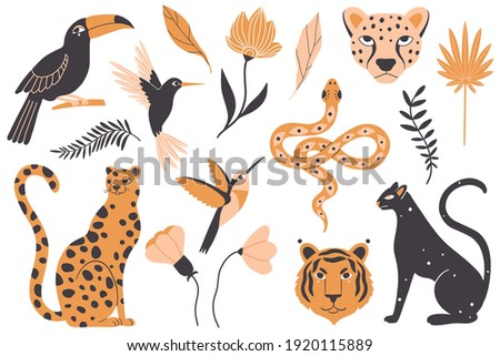 Tropical exotic animals, birds and plants. Leopard, panther, tiger, hummingbird, snake, toucan, wild flowers and leaves. Vector illustration.  Animals and plants in the jungle, rainforest. Wildlife