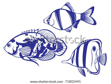 tropical fish set  2 vector