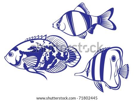 tropical fish set  2 vector