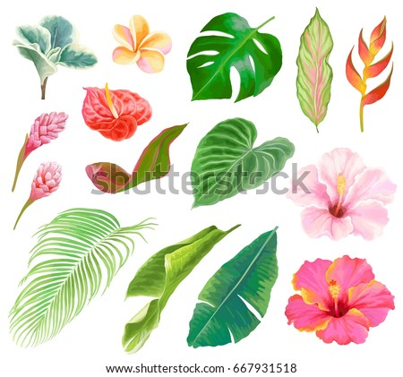 tropical floral collection of