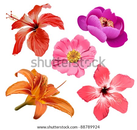 Tropical flower, exotic hibiscus