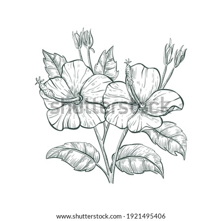 Tropical flower Hibiscus, vector sketch illustration. Sketch Hibiscus flower, isolated flower retro sign. Floral hand drawn element for fabric print, social media or romantic label graphic sign.