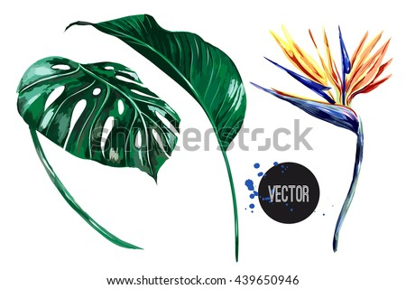 tropical flower  jungle leaves