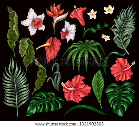 Tropical flowers and leaves such as banana, palm, monstera leaf and narcissus, hibiscus, plumeria isolated elements