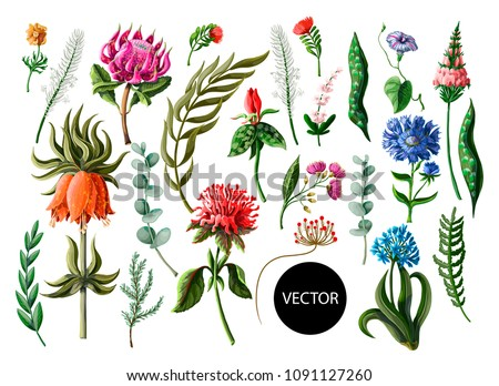 Tropical flowers in realistic and line style isolated on a white background.