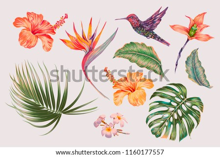 Tropical flowers, jungle leaves, monstera leaf, hibiscus, bird of paradise flower, plumeria, orchid, strelitzia, hummingbird. Vector vintage exotic illustrations, floral elements isolated