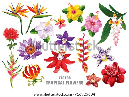 Tropical flowers set. Vector design isolated elements on the white background.