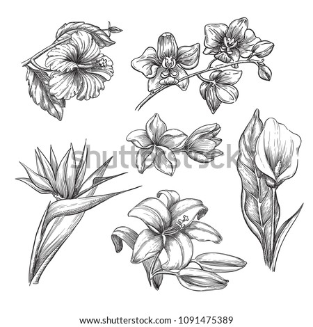 stock-vector-tropical-flowers-set-vector-sketch-illustration-hand-drawn-tropic-nature-and-floral-design