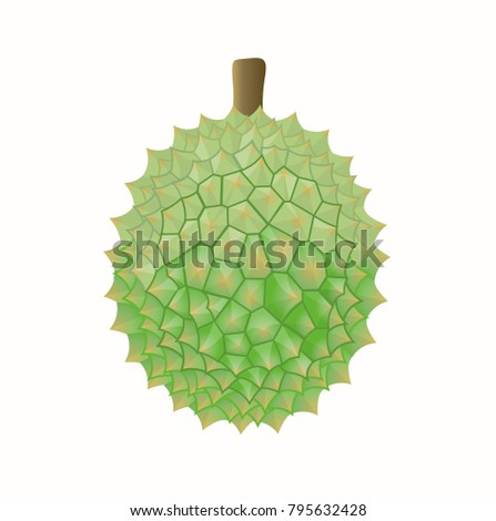 Tropical fruit of durian on white background. Vector illustration.