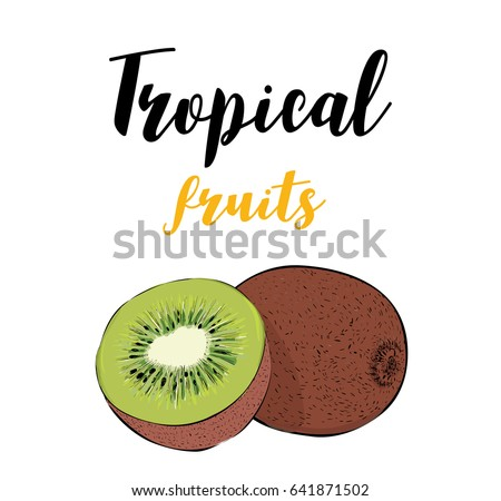 tropical fruit of kiwi a slice