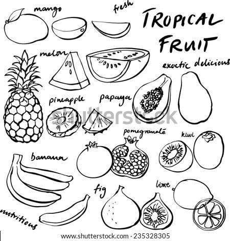 Tropical fruit set vector drawing