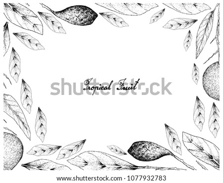 Tropical Fruits, Illustration Frame of Hand Drawn Sketch Fresh Ripe Apple Mango and Chebulic Myrobalan or Terminalia Cebula with Leaves and Fruits Isolated on White Background. Zdjęcia stock ©