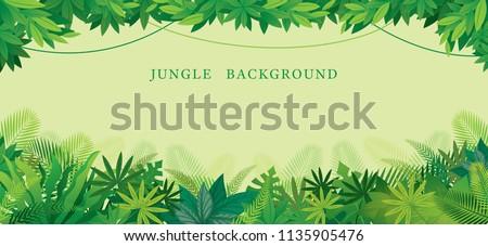 tropical jungle frame  forrest